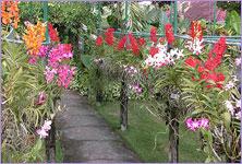 Genial Bali Orchid Garden, Denpasar,bali